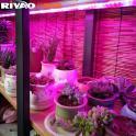 多肉植物补光灯 多肉防徒长红蓝光5比1 LED补光灯