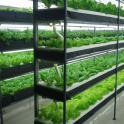 led叶菜生长灯  植物工厂灯