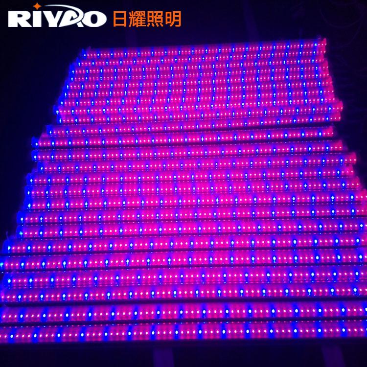 led红蓝光植物灯 红蓝3比1