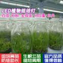 led植物组培灯 T8植物生长灯 育苗灯