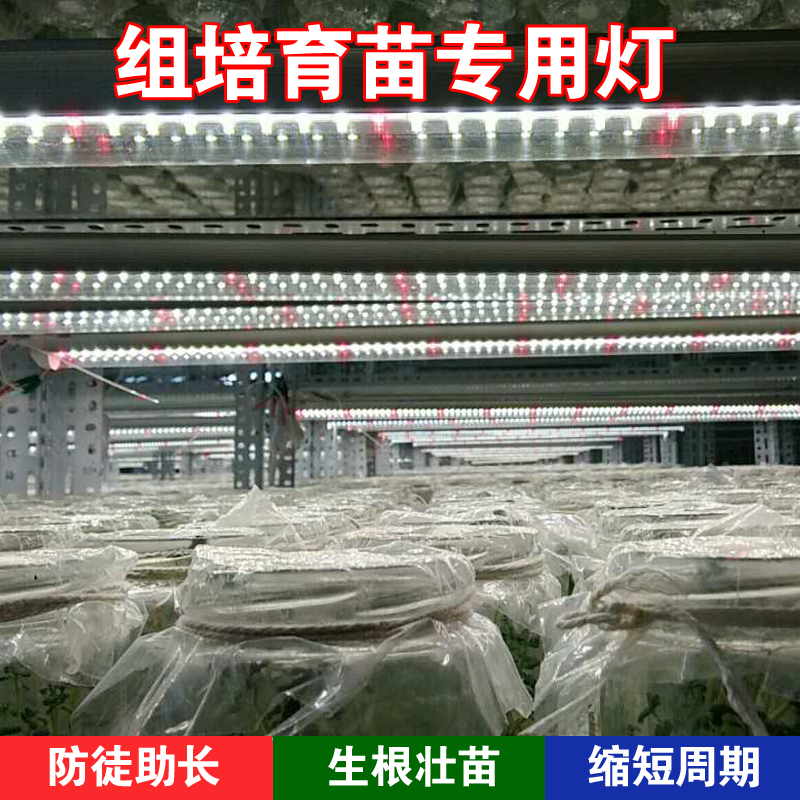 led植物组培灯 室内组培灯 马铃薯土豆白芨石斛育苗灯